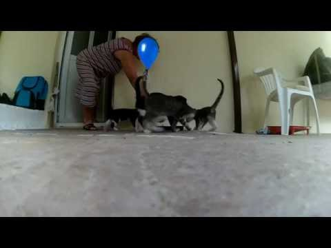 Cat Videos - Cats Doing Nothing 2: Almost Active