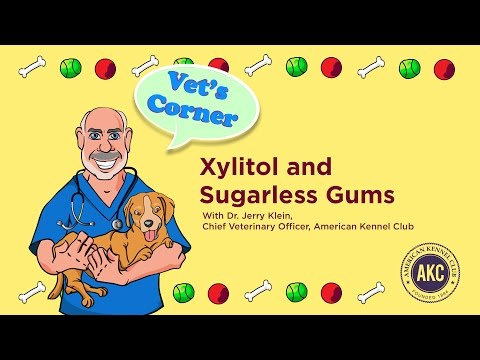 Xylitol and Sugarless Gums | Vet's Corner with Dr. Jerry Klein