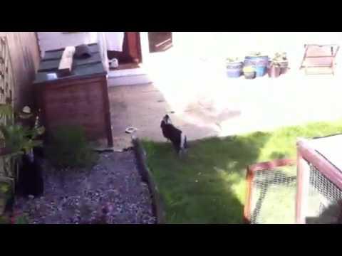 Rabbits attempting garden escape