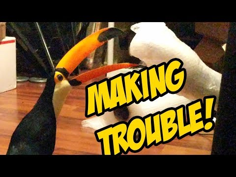 Pet Toucan is up to some mischief (AGAIN!!!)