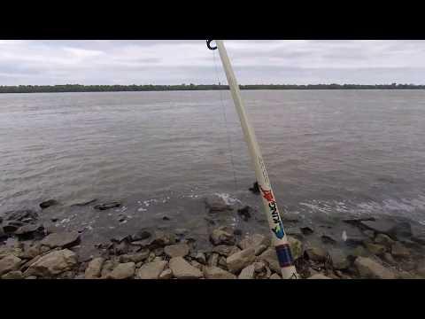 Catfish on cut Mullet in Mississippi River