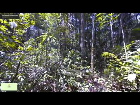 Google Street View extends to zip-lines through the Amazon rainforest
