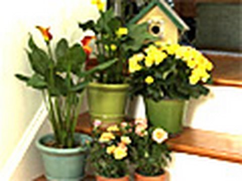 Go Green With House Plants
