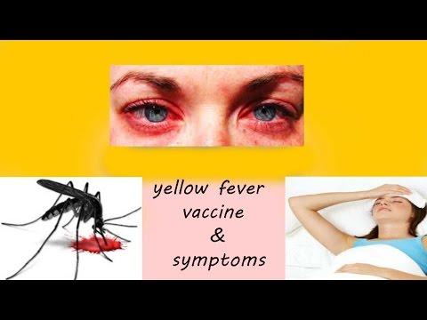 yellow fever vaccine | symptomps
