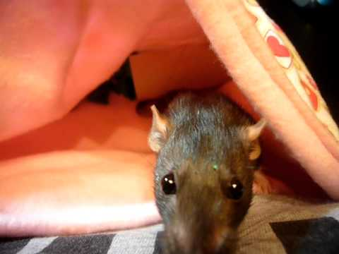 Cocoa in a Bonding Pouch