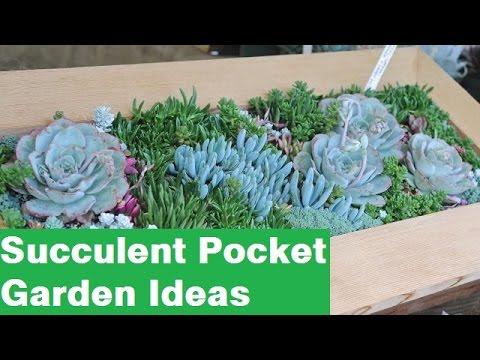 Succulent Pocket Garden Ideas