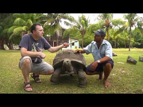 Giant tortoises of the Seychelles