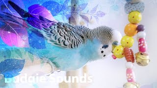 Budgie singing for 1 Hour Happy song! - myvideoplay com