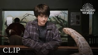Harry And The Snake | Harry Potter And The Philosopher