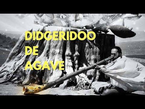 Didgeridoo de Agave / Agave Didgeridoo