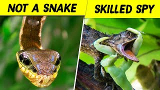 10 Unusual Animals That Are Not What They Seem
