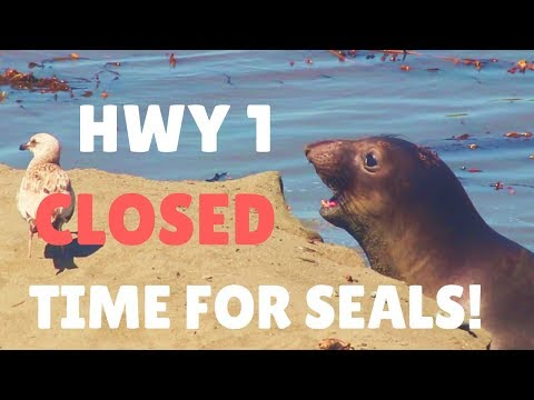 CA HIGHWAY 1 CLOSED, A STEALTH CAMPING SPOT & SEALS!