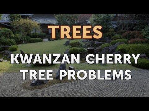 Kwanzan Cherry Tree Problems
