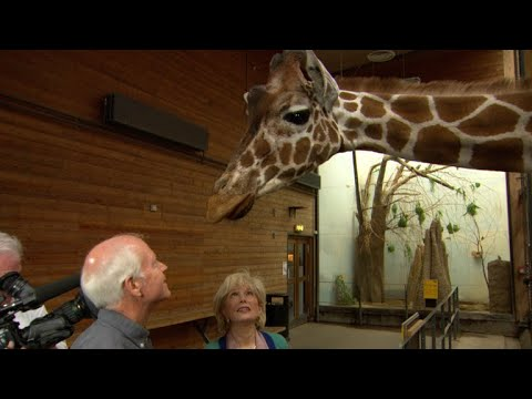 Are zookeepers playing God?
