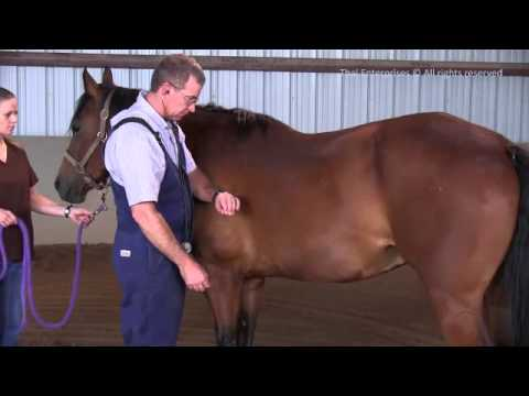 The Whole Horse Exam (WHE) - Revised July 2013