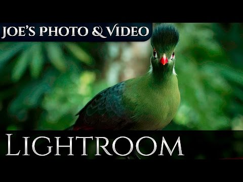 Reducing High ISO Noise In Your Photos | Lightroom 6 & CC Tutorial