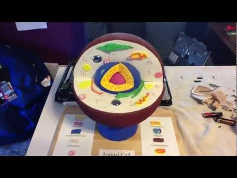 Animal Cell Model: What To Use