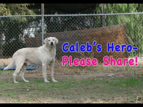 Caleb's Street Rescue and Rehab- PLEASE SHARE