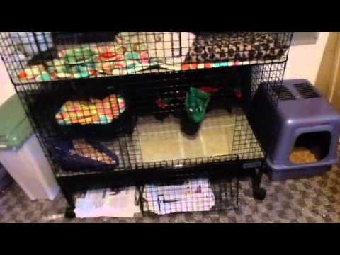 Ferret owning tips: Setting up your ferret's room, litter, keeping the cage clean