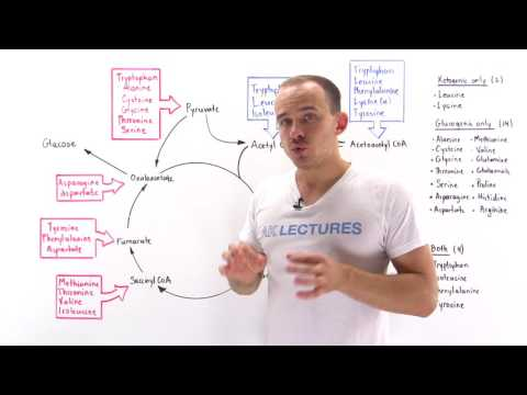 Introduction to glucogenic and ketogenic amino acids