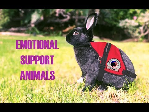 Rabbits As Emotional Support Animals