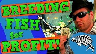 Breeding Fish For Profit - Top Five Tips