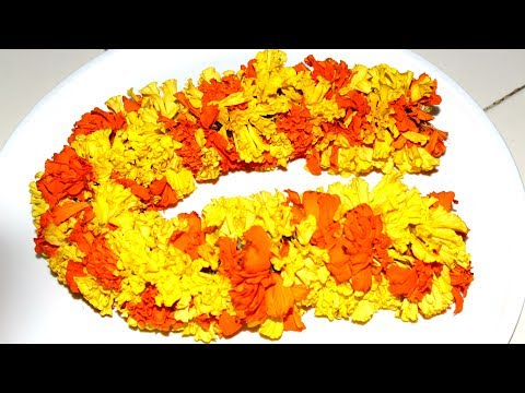 Making Garland with Marigold Flowers    Knot Marigold Flowers