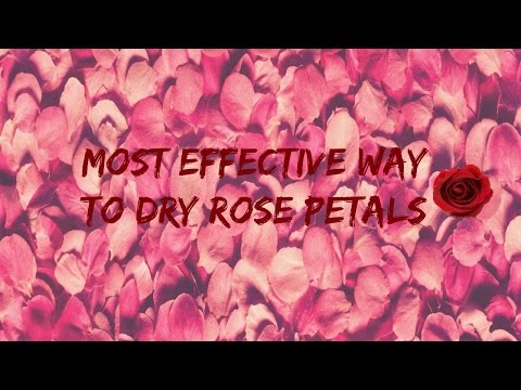 How to dry rose petals!!!!!! (perfect Mother's Day gift)