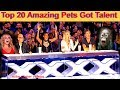 Best Top 20 Amazing Pet Animals Got Talent Auditions Golden AGT BGT Moments Funny Dogs Cats