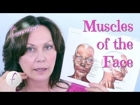 Learn the Muscles of the Face | FACEROBICS®