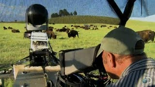 Filming Bison From an ATV   North America