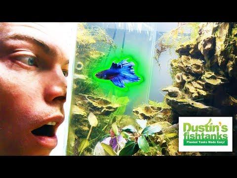 BETTA FISH AQUARIUMS - MOST Popular Freshwater Aquarium Fish