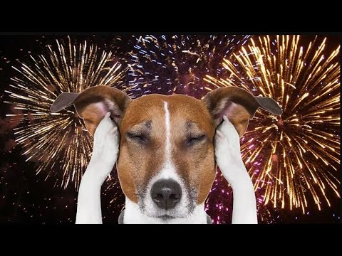 How to Calm a Dog Scared of Fireworks | Working Easy Tips | Dog Training Tips