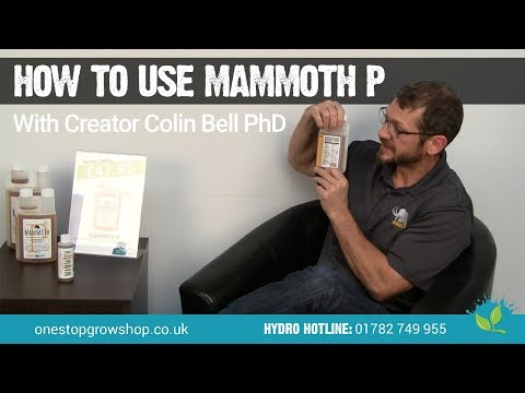 How to Use Mammoth P With Its Creator Colin Bell