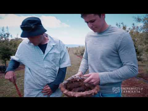 Agriculture and Business Graduate: Henry Terry   Truffle gold in Tassie