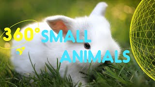 Meet the Small Animals Compilation | 360 Degrees for Kids