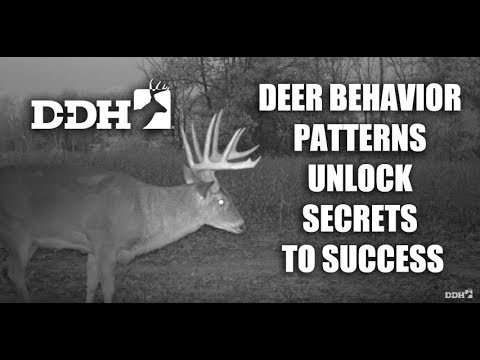 Study Deer Behavior Patterns to Unlock Hunting Success  | Steve Bartylla @deerhuntingmag