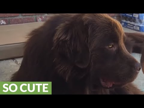 Dog simply can't stop licking baby's feet