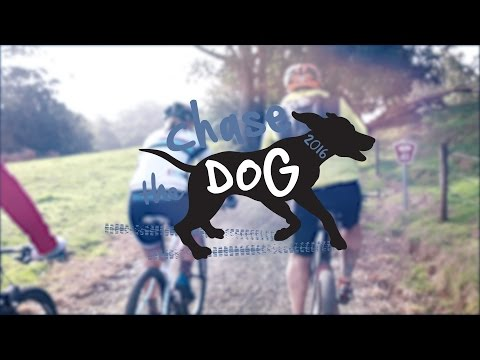 Chase the Dog 2016 Presented by BSS