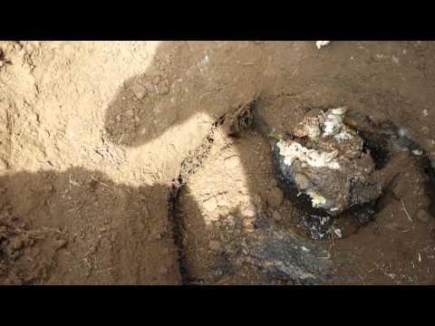 Septic clogged inlet baffle