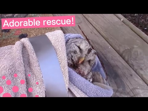 MAN RESCUES OWL FROM BARBED WIRE FENCE