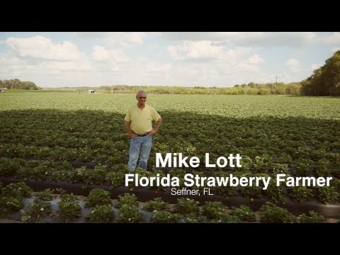 Strawberry Farmer Mike Lott