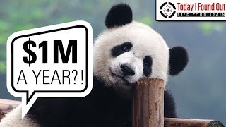 Renting Pandas