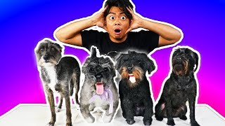 I Bought Fake Dogs Online!