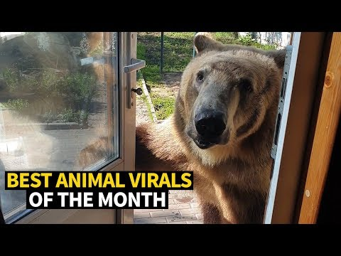 Xxx Mp4 Top Viral Animal Videos May 2019 3gp Sex