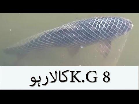 FISHING IN PAKISTAN latest video 2017. 8 KG KALA RAHO. FISHING IN SEA' FISHING VIDEOS WIT HOOKS.