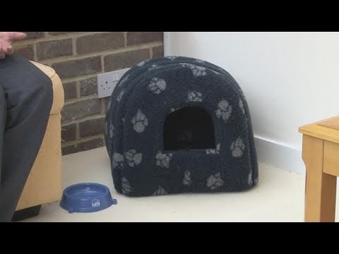 How To Introduce A Cat To Its New Home