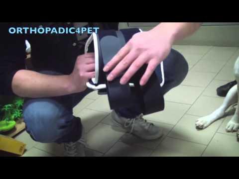 BT NECK - Collar ortopédico rígido para perros