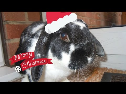 VLOG: Rosie Opening and Reacting To Her Christmas Presents | RosieBunneh