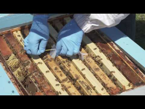 5 Using Apivar® to Control Varroa Mites 111116